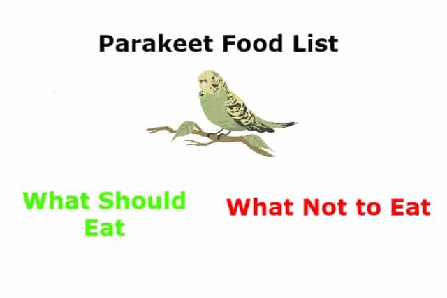 parakeet food list