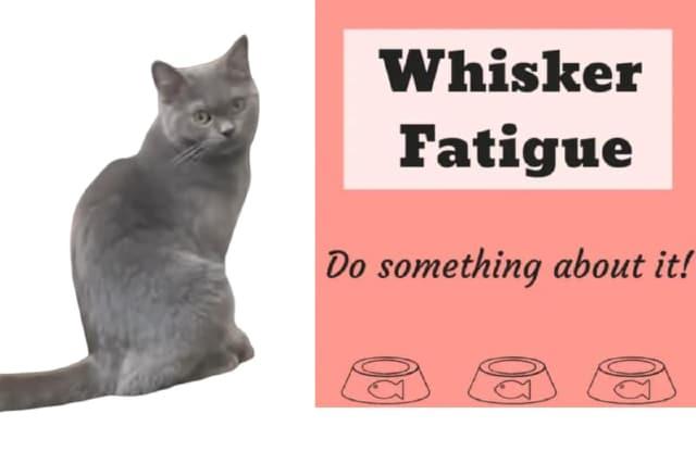 whisker fatigue