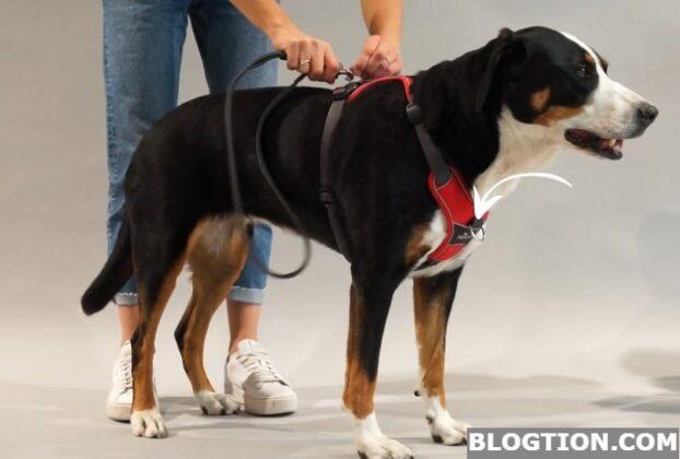 Hunter Dog Harness